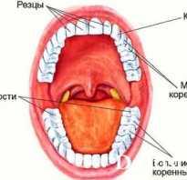 Из чего сделаны зубы человека