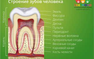 Растет коренной зуб