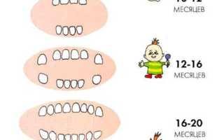 Зубы у новорожденных таблица