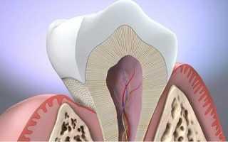 Между зубом и десной щель
