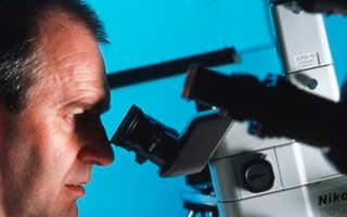 Выращивание зубов из стволовых клеток
